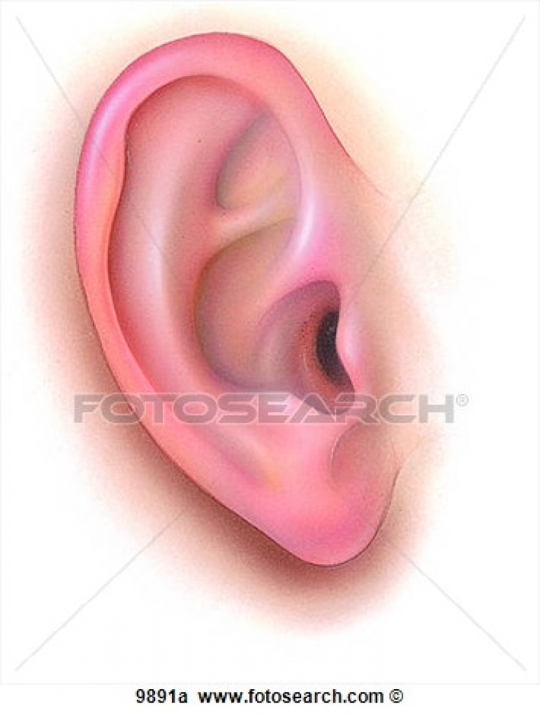 outer ear clipart outer ear clipart stock illustrations of.