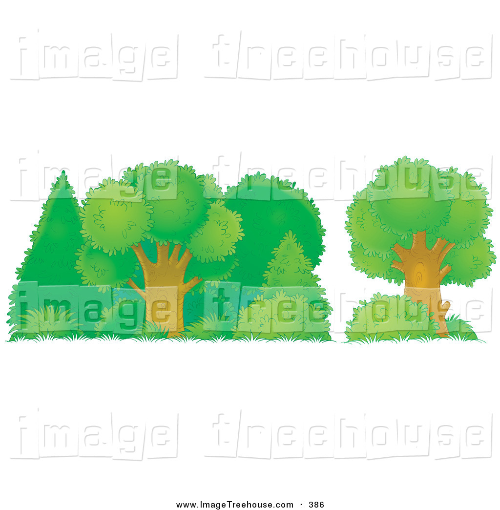 Clipart of a Healthy Green Trees, Shrubs and Bushes in a Forest on.