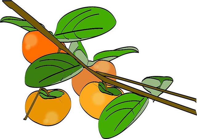 Free photo Perssimo Khaki 3cmlong Diospyros Kaki Fruit.