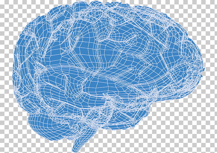 Human brain Euclidean , 3d brain PNG clipart.