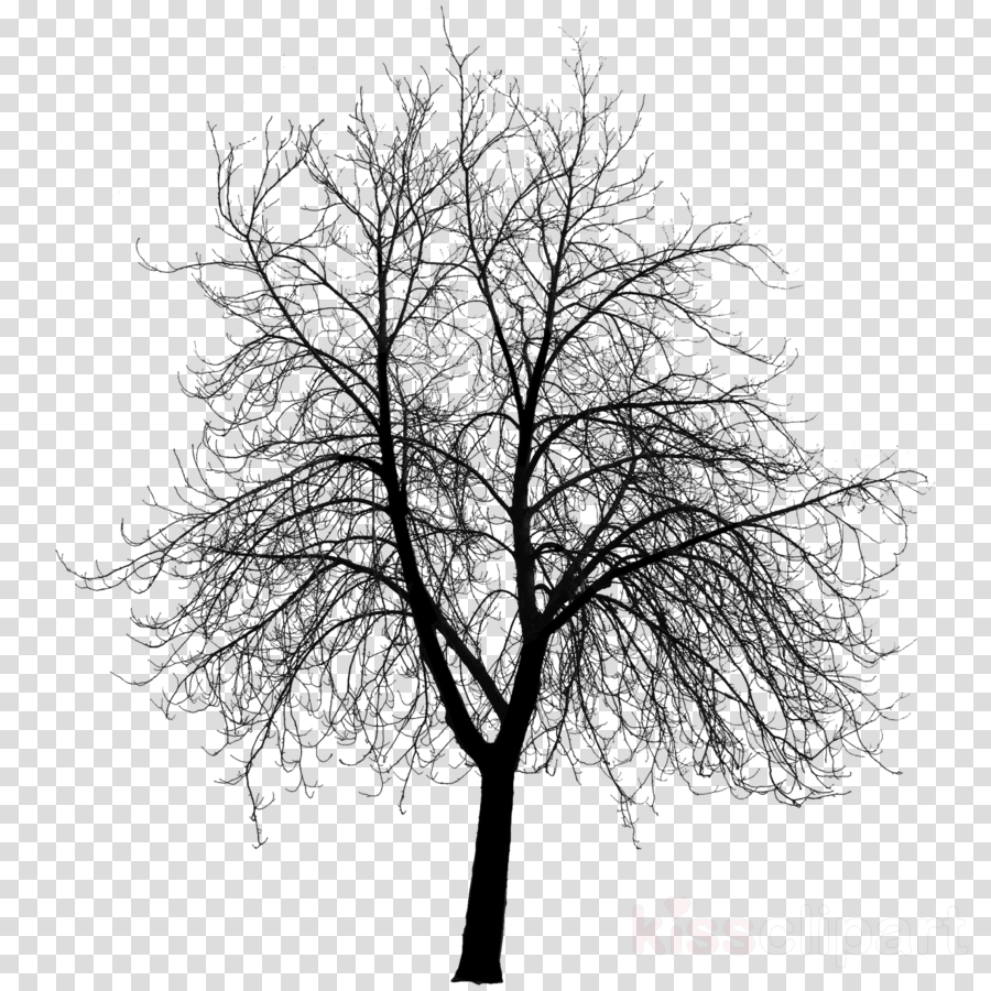 Download HD Bare Tree 3d Model Clipart Tree The Work Of Wind.