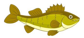 Zander Walleye Fish Fishing On White Background Illustration.