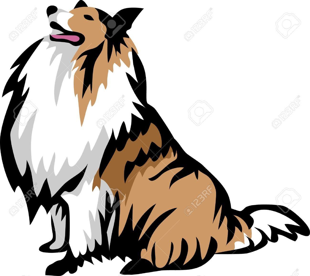 rough collie: sitting collie dog.