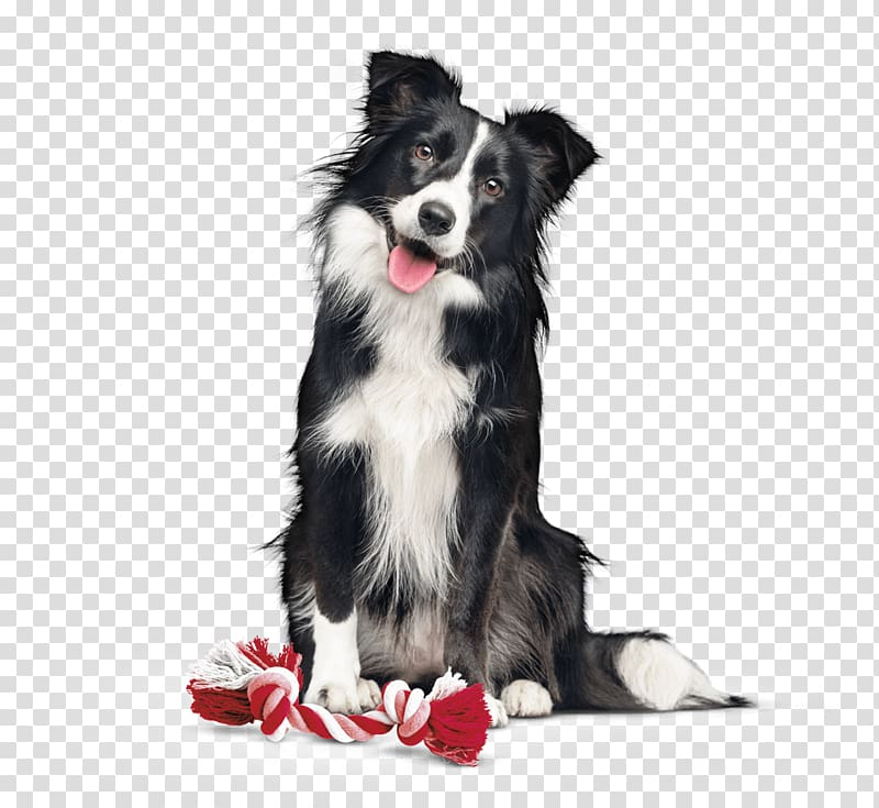 Border Collie Dog breed Rough Collie Companion dog Dog Food.