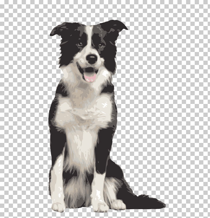 Border Collie Rough Collie Bearded Collie Dog breed, golden.