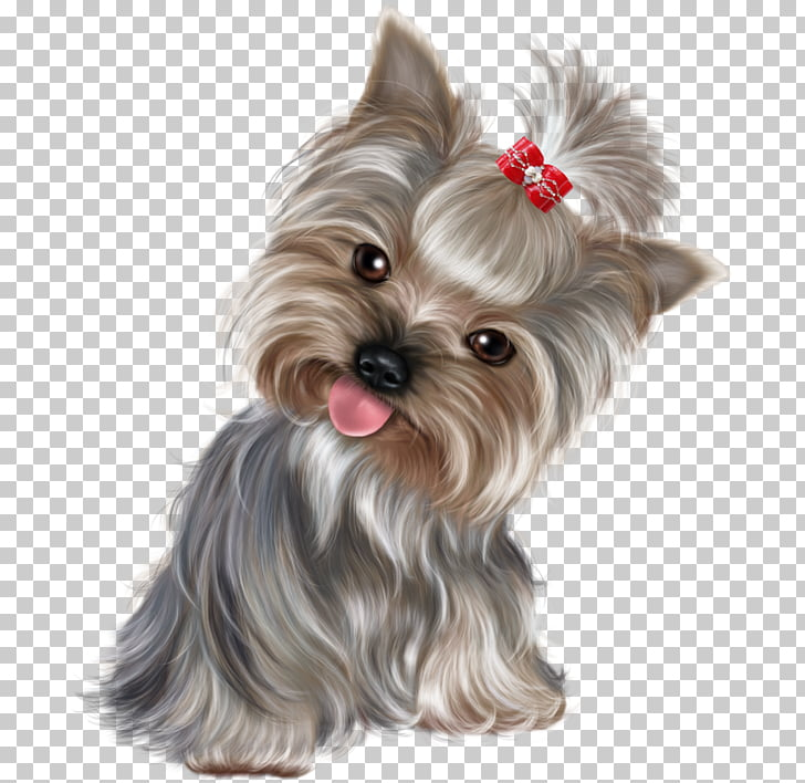 Yorkshire Terrier Miniature Schnauzer Puppy Purebred dog.