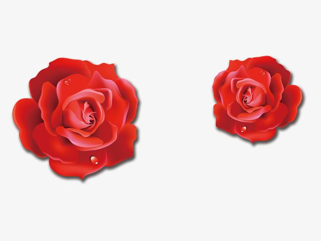 Red Rose Three Dimensional Flowers.