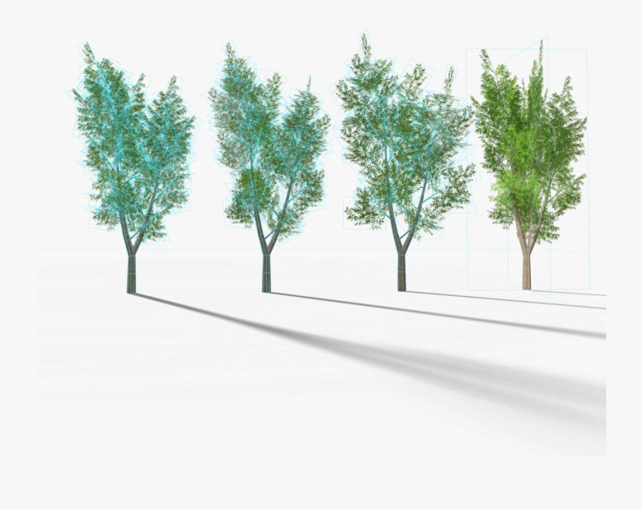 Transparent Eucalyptus Tree Clipart.
