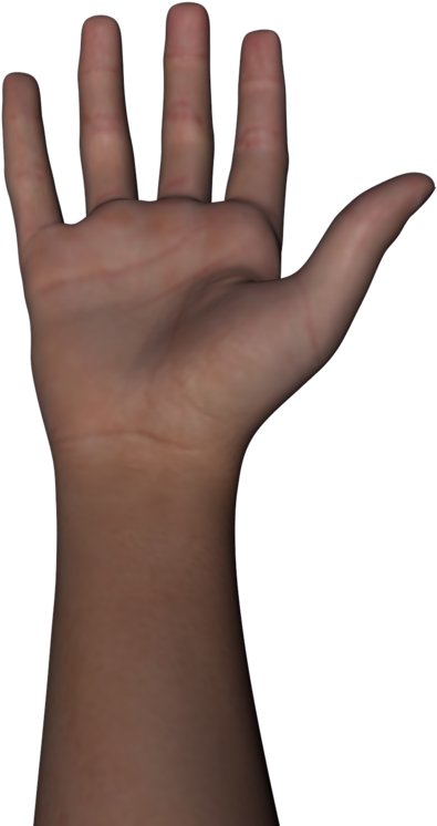 Free Png Of Body Parts Transparent Of Body Parts.
