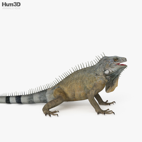 Clipart iguana Transparent pictures on F.