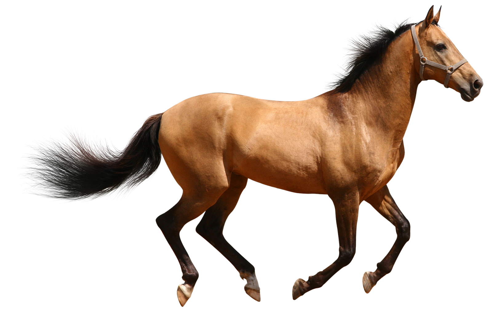 Horse Desktop Wallpaper Clip art.