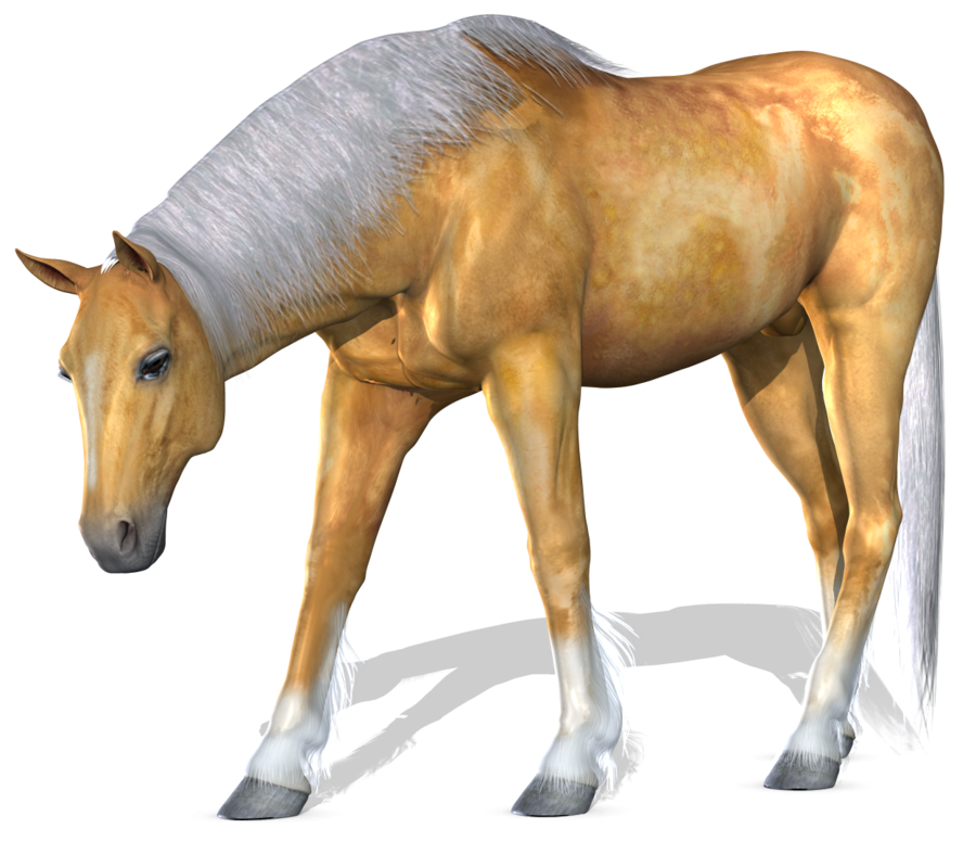 3d Horse Png 4.