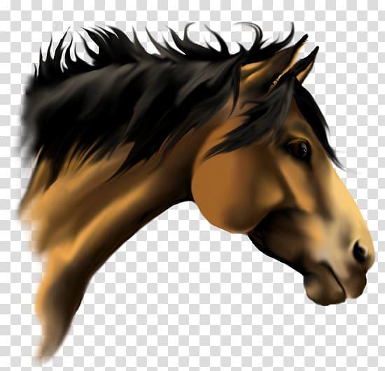 American Paint Horse American Quarter Horse Stallion 3D.
