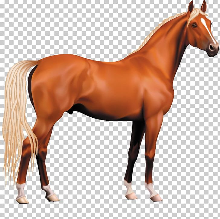 Morgan Horse Pony Stallion PNG, Clipart, 3d Animation.