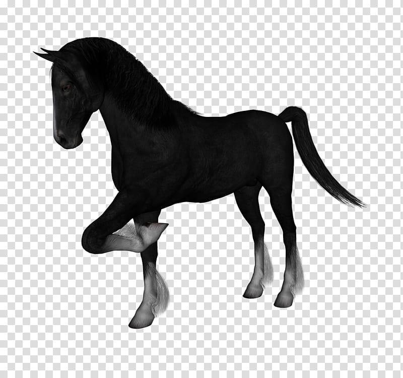 D Horses , black horse transparent background PNG clipart.