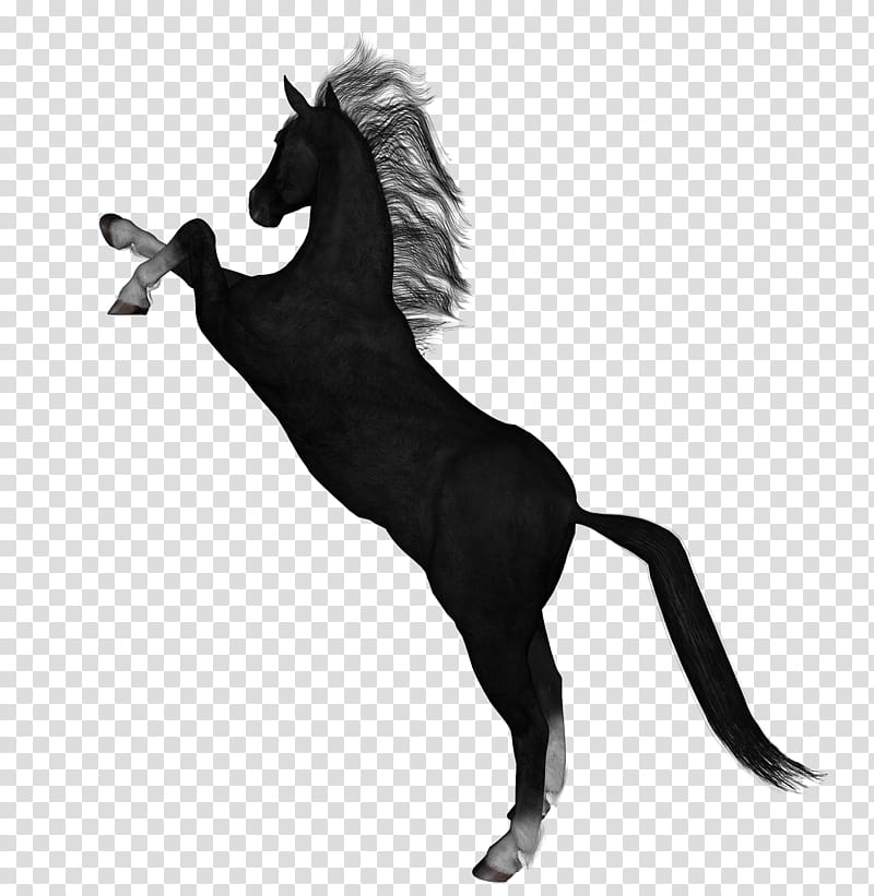 D Horses , black and white horse transparent background PNG.
