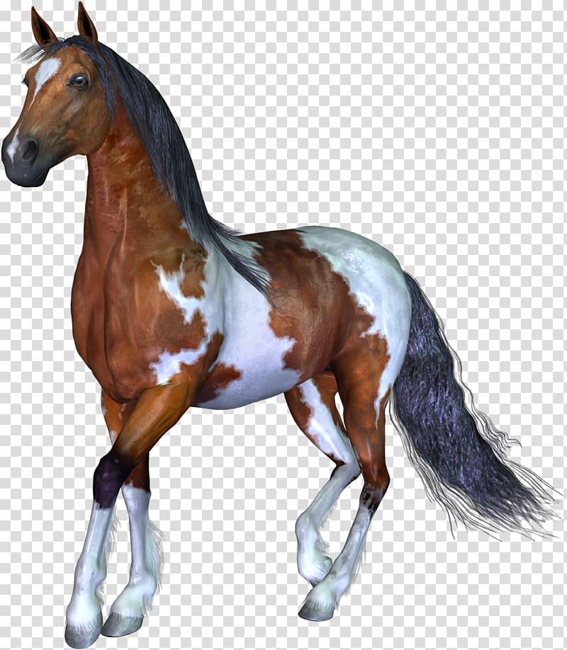 Horse 3D computer graphics Animal, horse transparent.