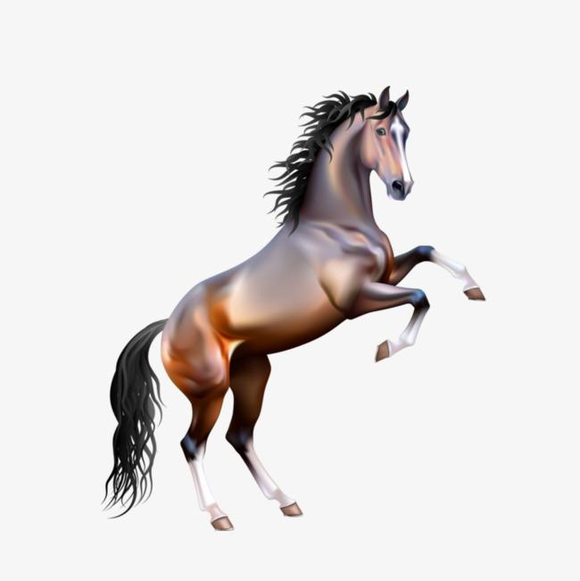 PNG HD Horse Transparent HD Horse.PNG Images..