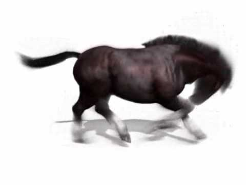 3d Horse Gallop animation.
