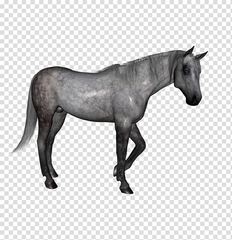 D Horses , gray horse transparent background PNG clipart.