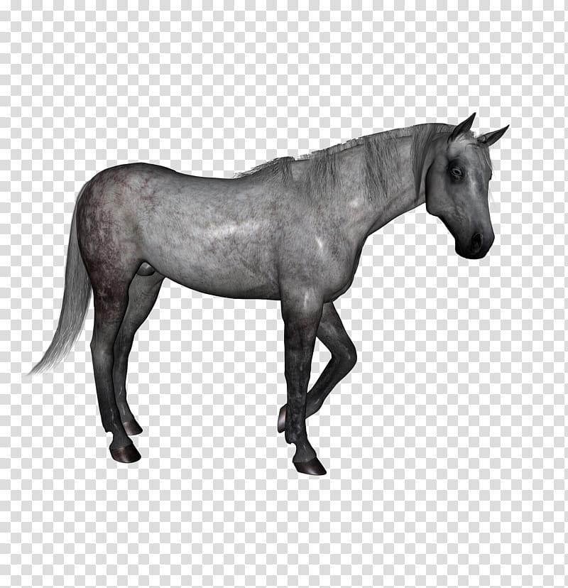 D Horses , gray horse transparent background PNG clipart.