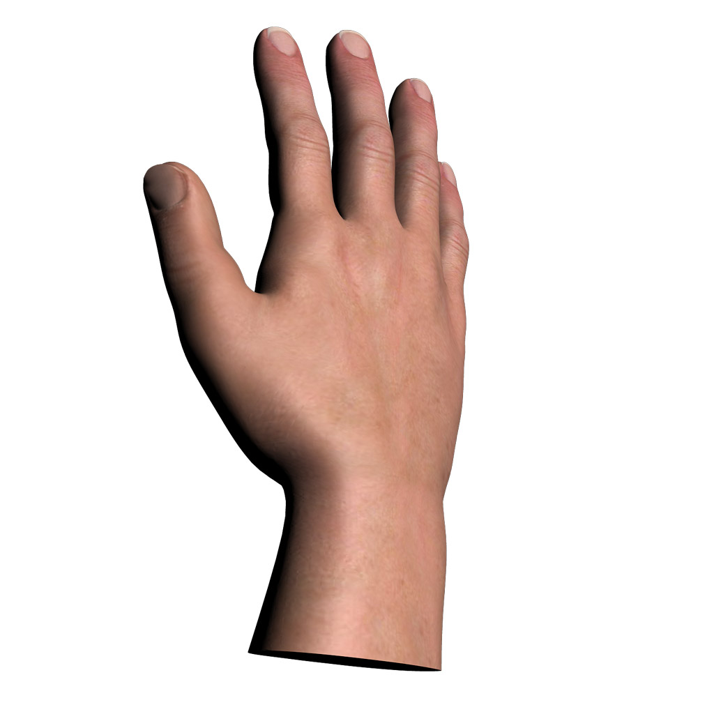 3D Model of 3d male hand.