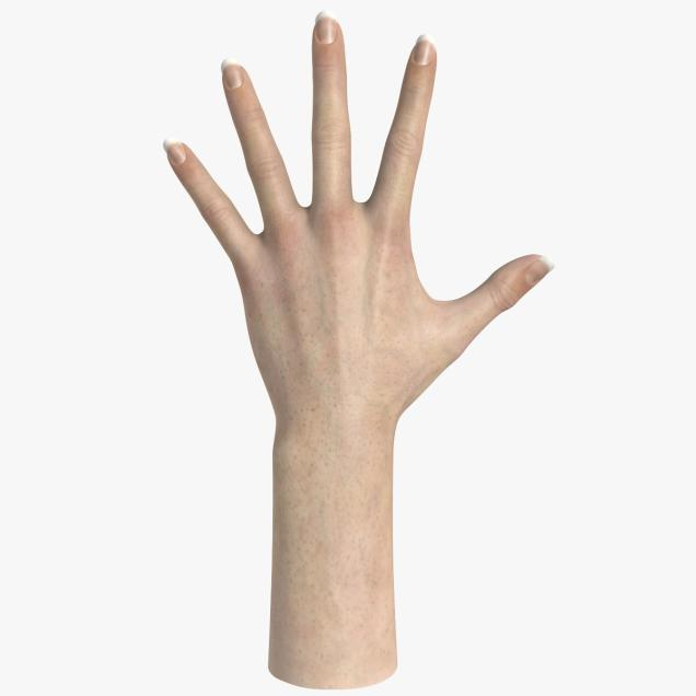 Realistic Male Hand 3d Model.
