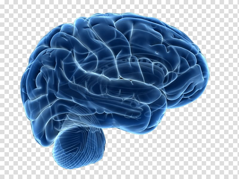 Human brain Neuroimaging Neuroscience Therapy, Brain.