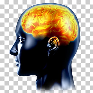 Neurology Neurological disorder Doctor of Medicine Brain.