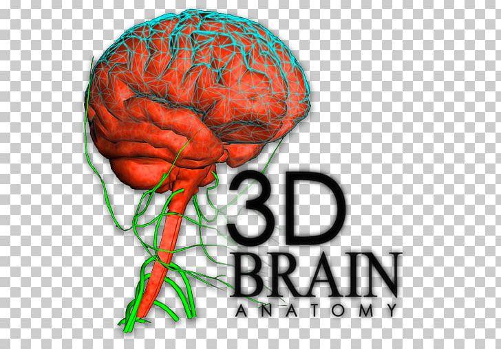 Brain Human Behavior Organism Font PNG, Clipart, 3d Human.
