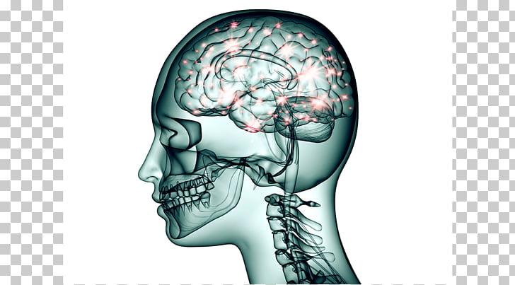 Brain Topiramate Neuron Neurology Nervous system, Brain.