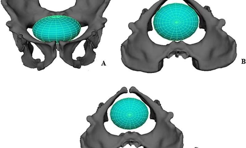 Computer simulations show human ancestors would have had an.