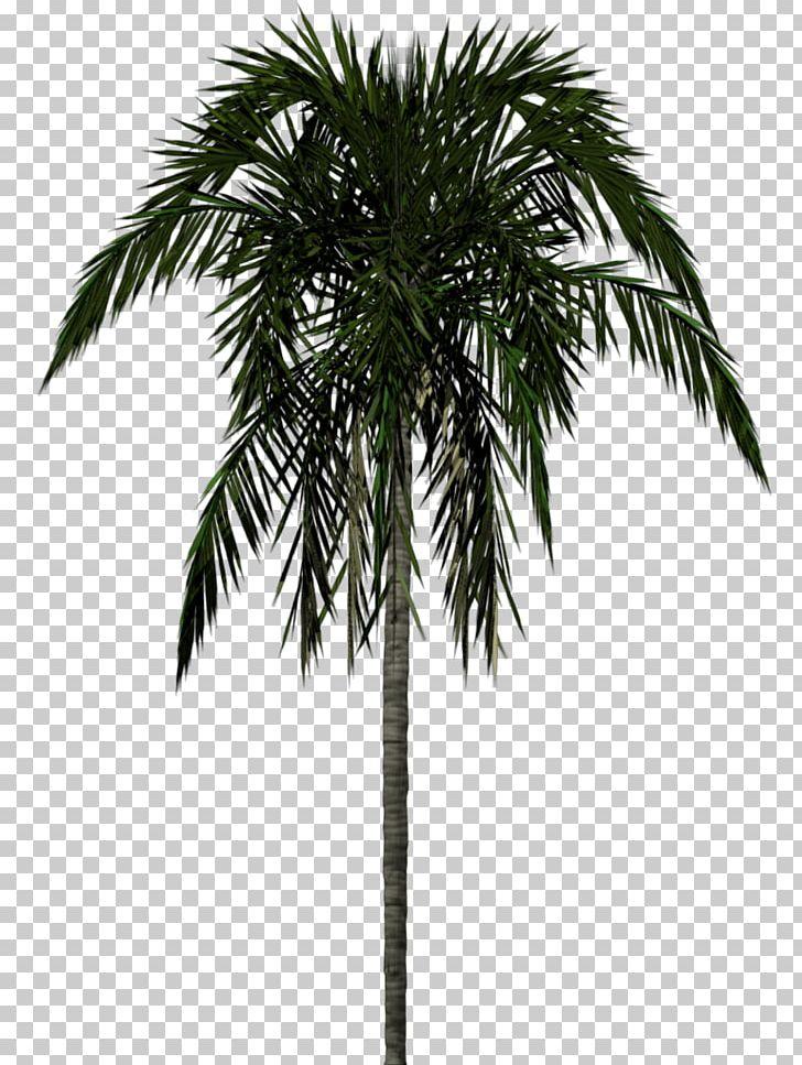 Arecaceae Tree 3D Modeling PNG, Clipart, Archontophoenix.