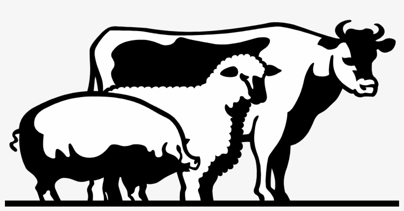 4 H Livestock Of Clipart.