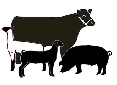 Livestock Show Animal Clipart.