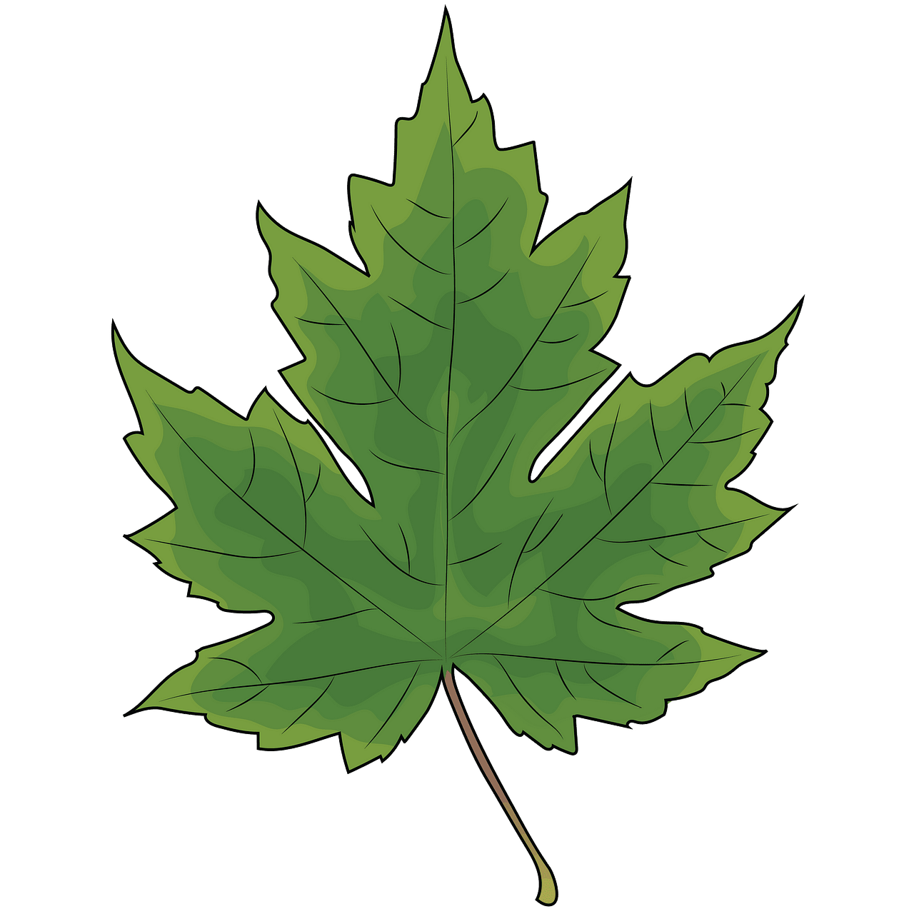 Maple leaf clipart. Free download..