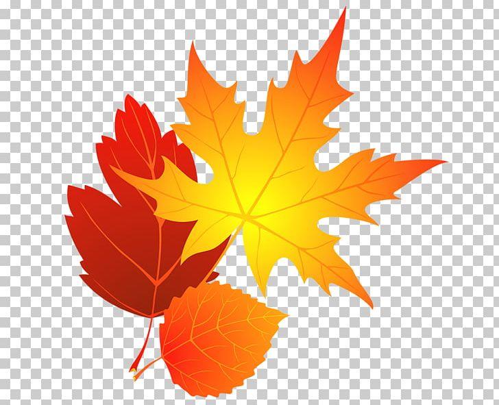 Autumn Leaf Color Maple Leaf PNG, Clipart, Autumn, Autumn.