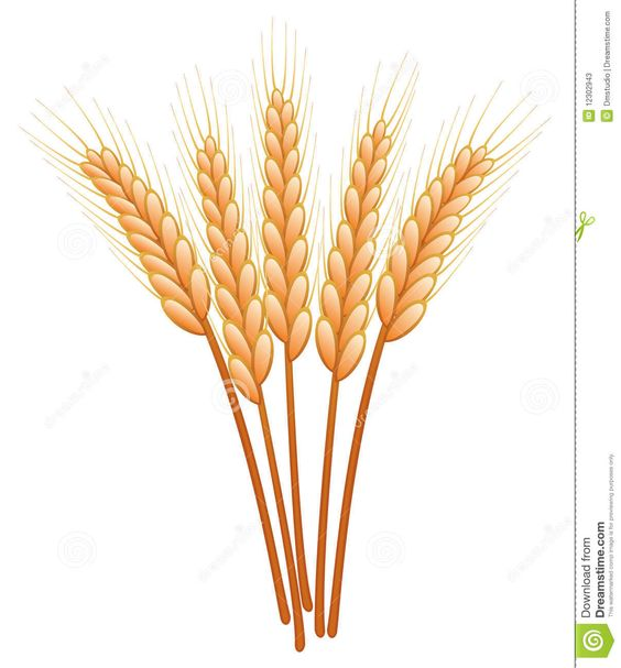 4 Wheat Clipart.