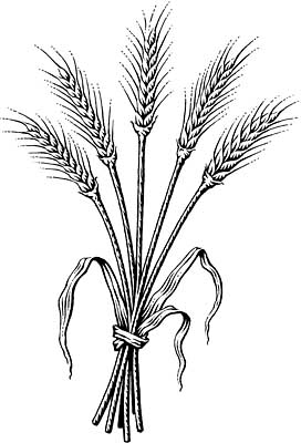 wheat coloring pages.