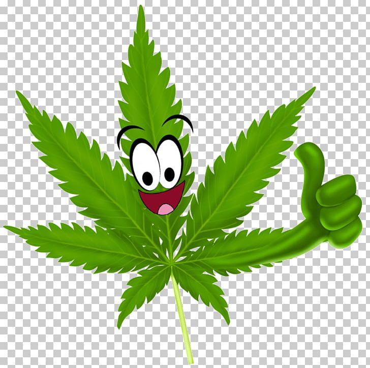 Medical Cannabis Legality Of Cannabis 420 Day Marijuana PNG, Clipart.