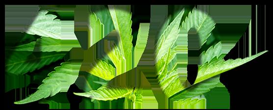 Leaf,Green,Plant,Organism,Terrestrial plant,Font,Anthurium,Flower.