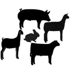Free Livestock Cliparts, Download Free Clip Art, Free Clip.