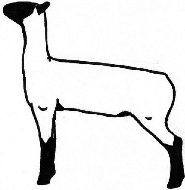 show lamb decal.