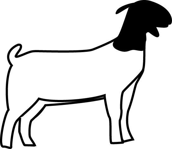 club show lambs clipart.