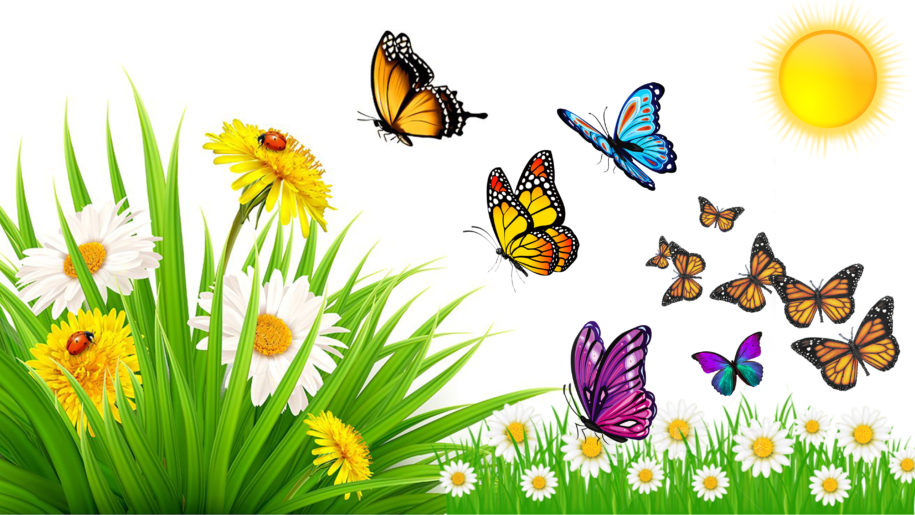 Nature Summer Meadow Insects Ladybird Beetle Butterflies In.