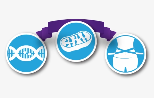 Free Mitochondria Clip Art with No Background.