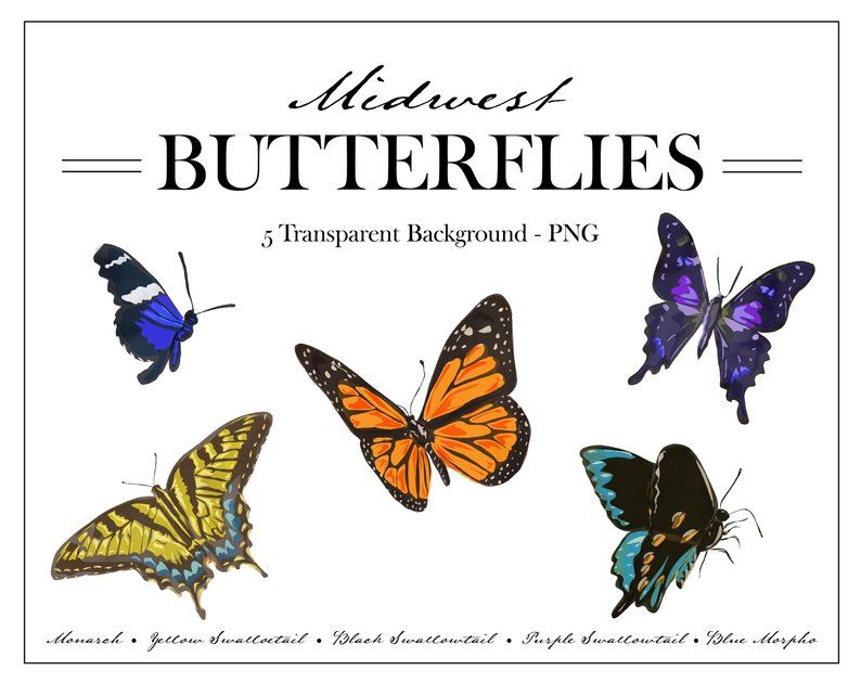 Midwest BUTTERFLIES clipart Collection Monarch Swallowtail.