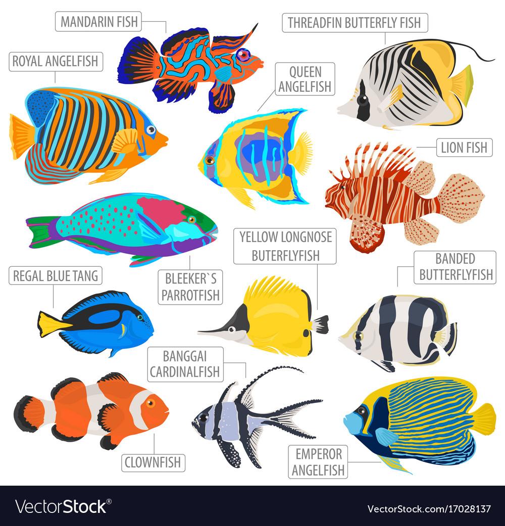 Tropical Fish Clipart fresh water fish 5.