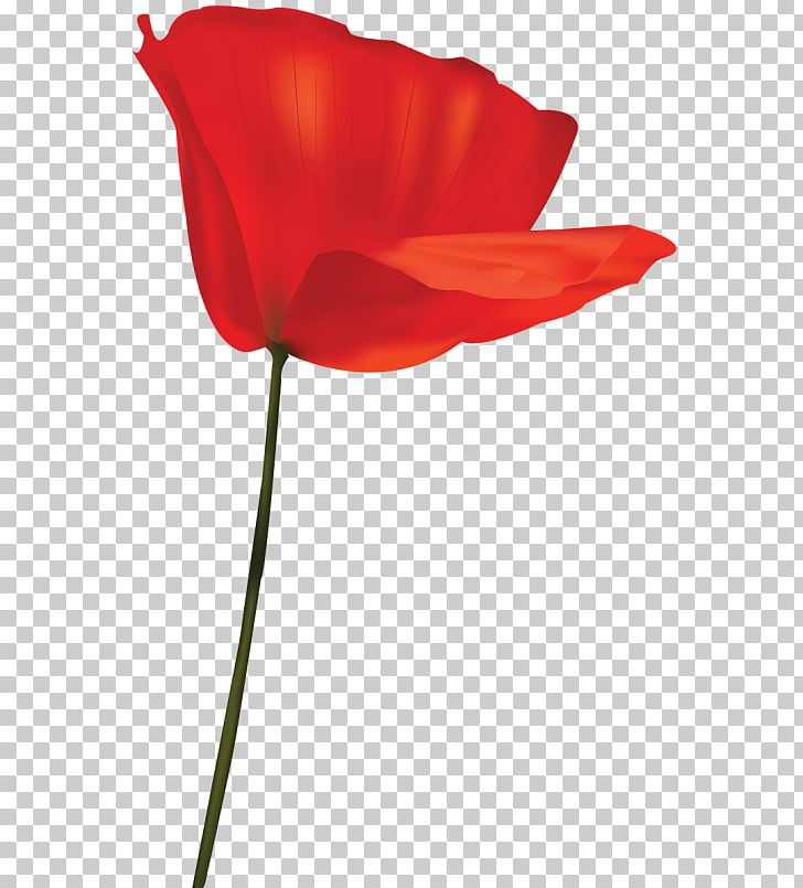 Tulip Garden Roses Cut Flowers Petal Plant Stem PNG, Clipart.