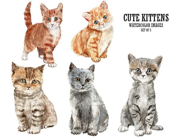 Pin by Jules Woodard on Watercolor animals  baby.